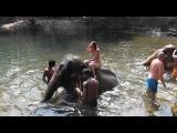 купаюсь на слоне